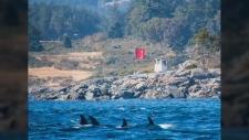 navy orcas blast