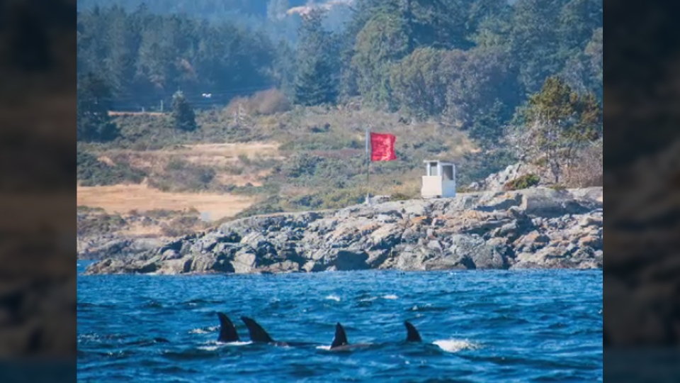 Whale-watching captains in Victoria claim an image taken right after a blast at a navy explosive test range shows that orcas came dangerously close. Aug. 31, 2017. (Courtesy SpringTide Whale Watching)