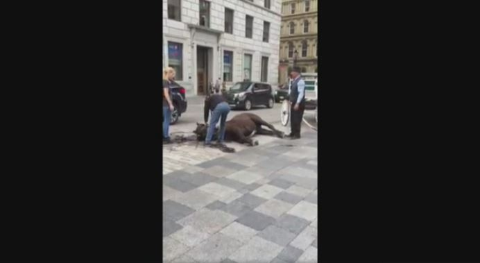 The video on Facebook shows a horse collapsing in Old Montreal.