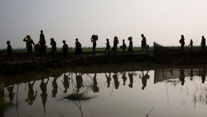 Members of Myanmar's Rohingya ethnic minority walk through rice fields after crossing the border into Bangladesh near Cox's Bazar's Teknaf area, Tuesday, Sept. 5, 2017. (Bernat Armangue/AP)