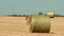 Dry summer takes toll on hay crops