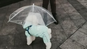 CTV Montreal: Dogs stay dry
