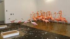 Flamingos and roseate spoonbills at Zoo Miami