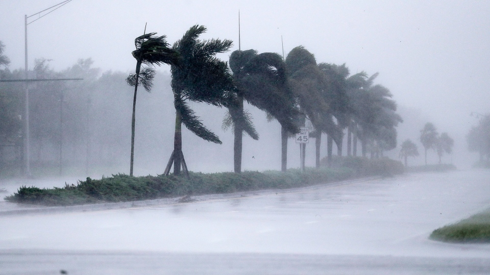 The winds from Hurricane Irma blow palm trees as it approaches Naples, Fla., Sunday, Sept. 10, 2017. (AP Photo/David Goldman)
