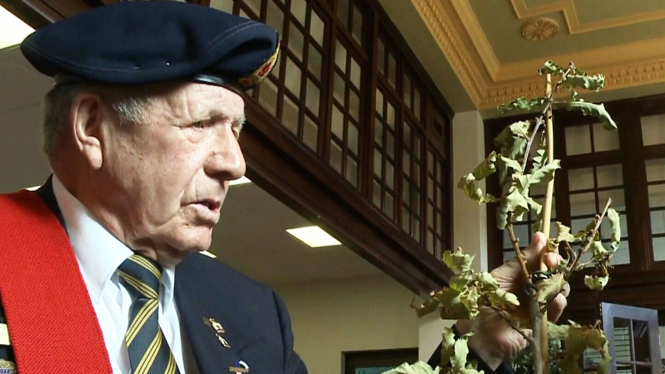 Canadian veteran Jack Perry, 86, said he's determined to replace a Vimy oak sapling ripped from its roots in Amherst, Nova Scotia in early September.