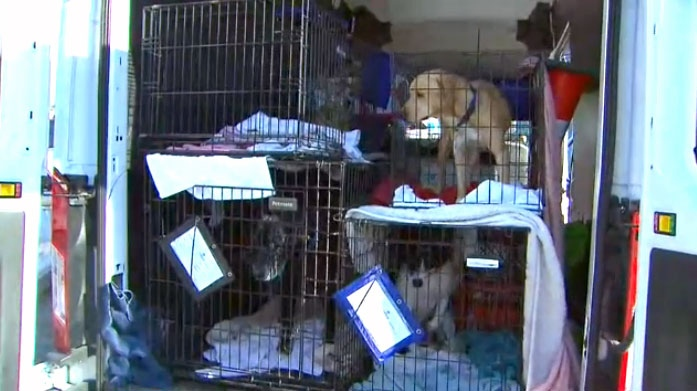 Approximately 50 dogs were rescued from Houston, Texas where a historic hurricane ravaged the area.