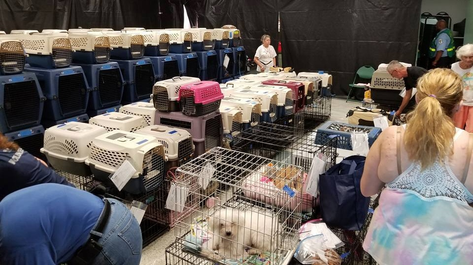 Animal cages are shown in a pet-friendly shelter in Palm Beach County, Fla. on Sept. 9. (Friends of Palm Beach County Animal Care and Control/Facebook)