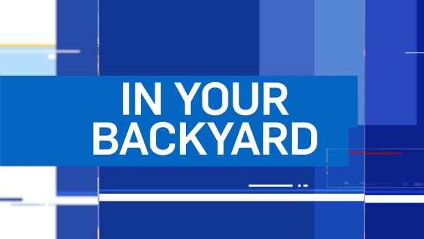In Your Backyard