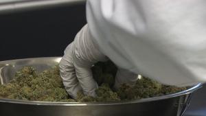 CTV National News: Timeline for pot legalization