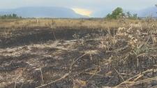 Kenwo wildfire, evacuated residents, Waterton Lake