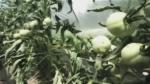 Corey Ahrens farm
