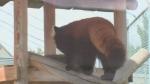 sask zoo
