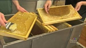 September's all about honey, honey!