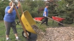CTV Northern Ontario: A 'Berry' Good Trail