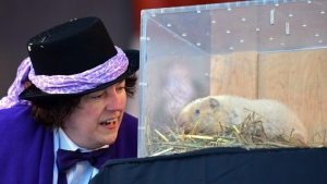 South Bruce Peninsula Mayor Janice Jackson looks at Wiarton Willie as the the albino groundhog makes his annual midwinter weather prediction in Wiarton, Ontario, Tuesday, Feb. 2, 2017. (Willy Waterton/The Canadian Press)