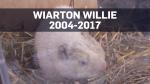 willie card