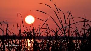 Brilliant, orange sun created a striking silhouette of the tall grass at Britannia Beach. (Cheryll Duquette/CTV Viewer)