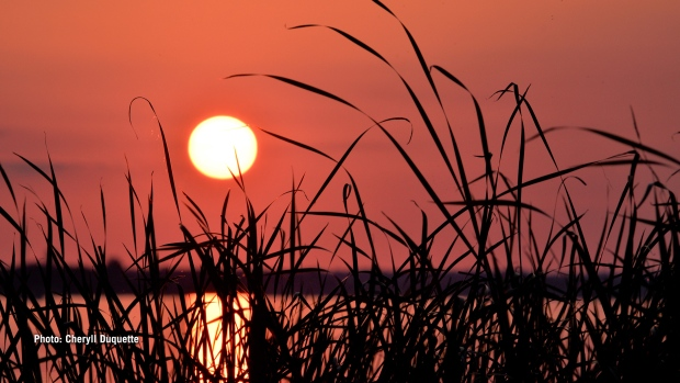 Brilliant, orange sun created a striking silhouette of the tall grass at Britannia Beach. (Cheryll Duquette/CTV Viewer)
