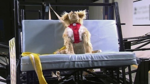 Crash tests show which pet restraints are safest for your pets travelling in vehicles.