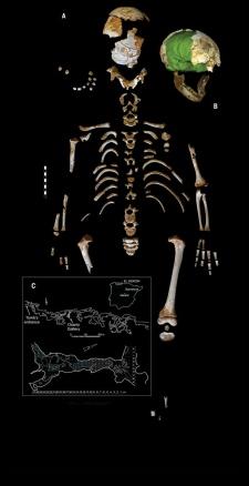El Sidrón J1 Neandertal skeleton