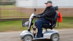A man drives a mobility scooter with his dog near Hannover, Germany on Thursday, Feb. 19, 2015. (AP Photo/dpa, Julian Stratenschulte)