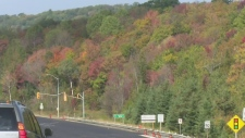 Peak viewing approaches for fall colours