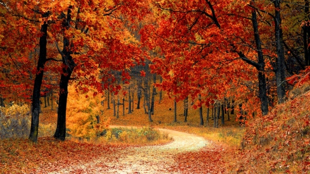 Here's where to see fall colours in the GTA this weekend