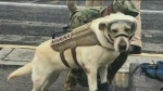 CTV Montreal: Trending: Mexican hero dog