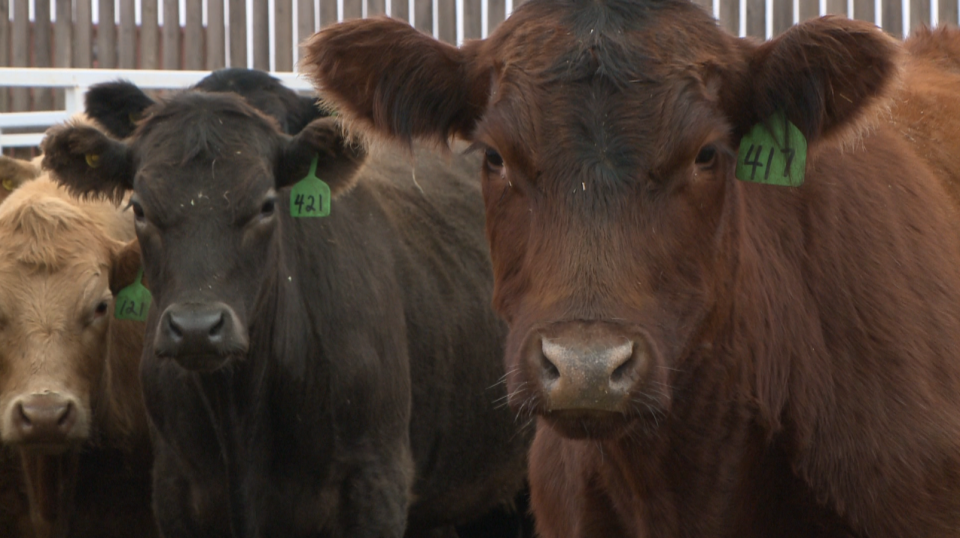 Sask. cattle service company opens new facility