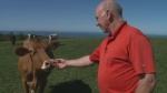 Frazer Hunter runs the only organic dairy farm east of Quebec in Knoydart, Nova Scotia.