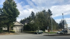 Surrey RCMP were on scene on Sept. 24, 2017 at a South Surrey home that has been the site of two shootings in 24 hours. No victims were found either time. (CTV)