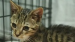 CTV Atlantic: Fredericton cat charity calls for he