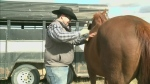 Residents take to horse back to fight cancer