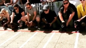 Dogs compete at annual dachshund race