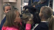CTV Calgary: Fozzy comes home