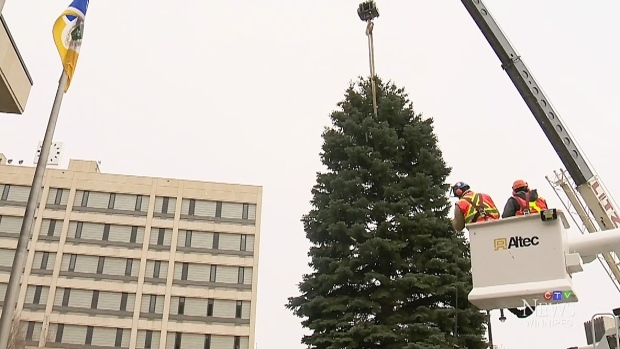 City inviting residents to donate Christmas tree for city hall ...