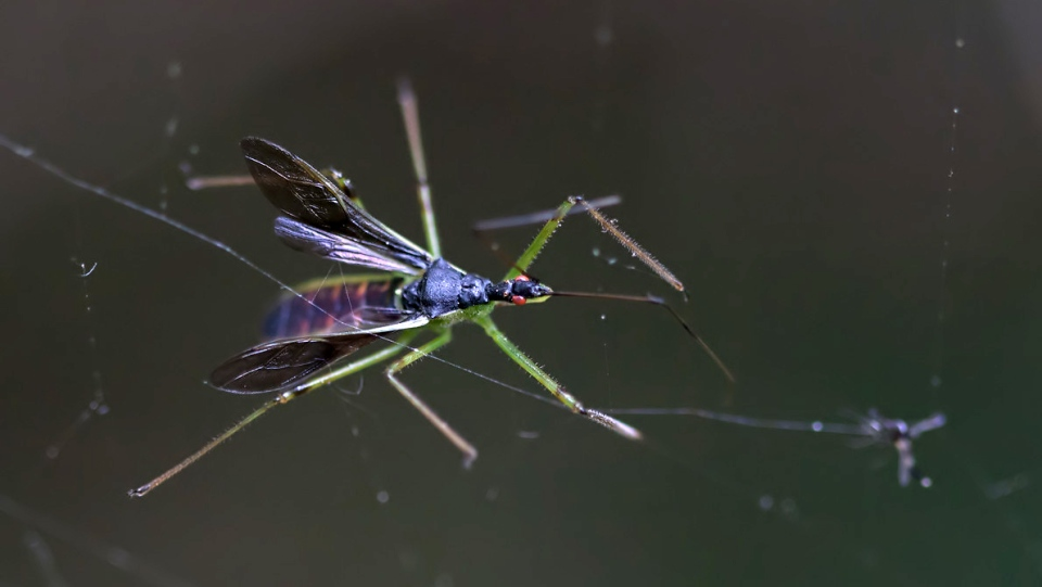 An assassin bug is shown at the Britannia Conservation area in Ottawa. (MyNews / Wilson Hum)