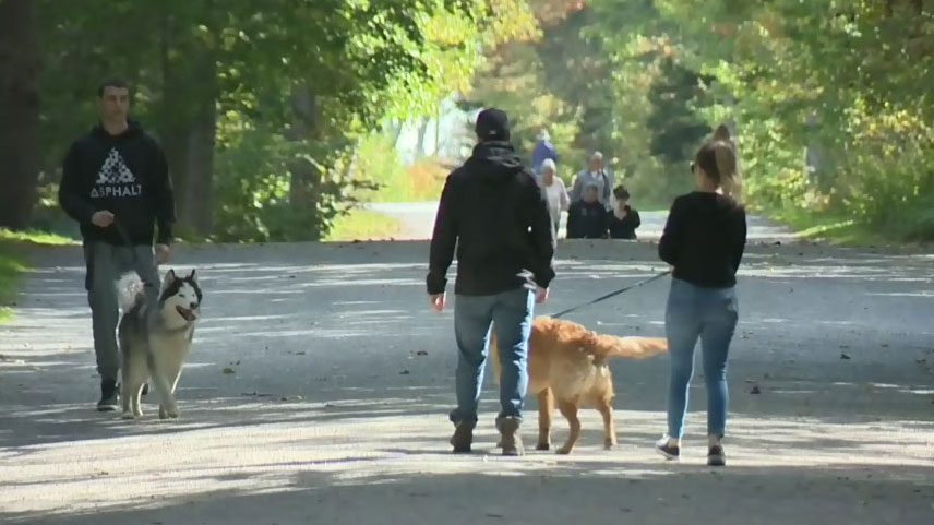 Vets in the Halifax-area are warning dog owners about leptospirosis, a contagious infection affecting many animals this year.