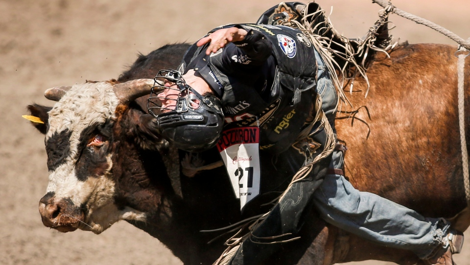 Ty Pozzobon, from Merritt, B.C., comes face to face with Wrangler Extreme during semi-final bull riding rodeo action at the Calgary Stampede in Calgary, Alta., Sunday, July 13, 2014. (THE CANADIAN PRESS/Jeff McIntosh)