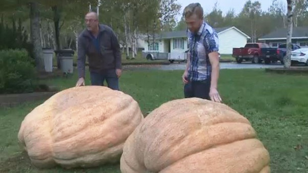 Ray and Zack Head's giant gourds were among the heaviest at an annual pumpkin festival in Millville, N.S.