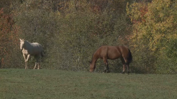 A family's last-ditch effort to save their horses in rural New Brunswick has been denied.