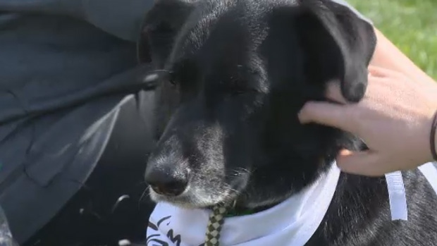 Katie Doucette's dog Diesel is recovering after coming in contact with a debilitating bacteria.