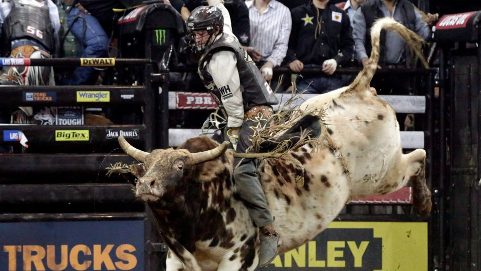 Ty Pozzobon competes in Round 1 of the Professional Bull Riders Monster Energy Invitational in New York's Madison Square Garden, Friday, Jan. 4, 2013. (Richard Drew/AP/The Canadian Press)