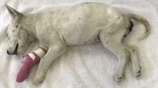 Puppy found in southwest dumpster