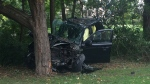 Man suffers minor injuries after a car crashed into a tree in the area of Elgin Street and Argyle Avenue.