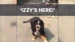 Found Dog title image