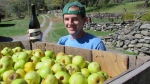 In this Oct. 3, 2017, photo, David Dolginow, co-founder of Shacksbury Cider, poses with a bottle of hard cider beside a bin of wild apples just harvested at an old farmstead in Rochester, Vt. (AP Photo/Lisa Rathke)