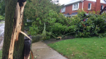 Storm and high winds knocked down dozens of trees in Waterloo Region including this one on Union St. (Oct. 15, 2017)