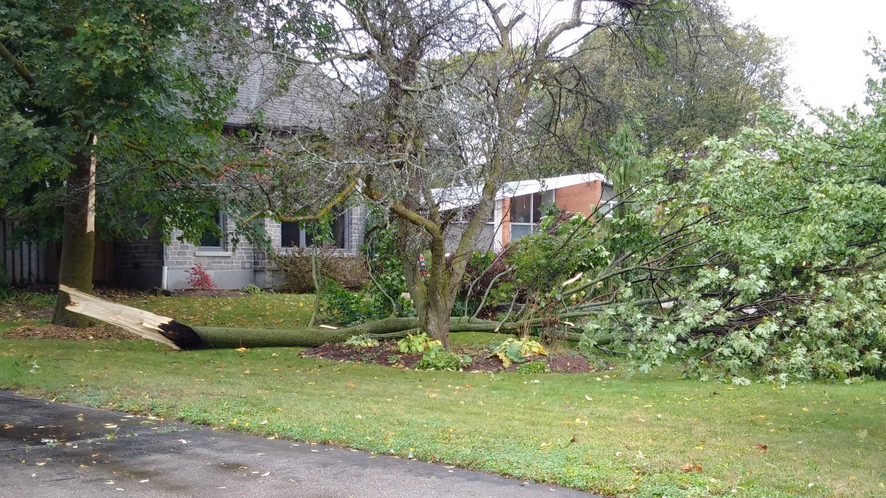 Downed tree on Golfview Place in Kitchener after the storm. (Courtesy: Shawn Mathers/Twitter)