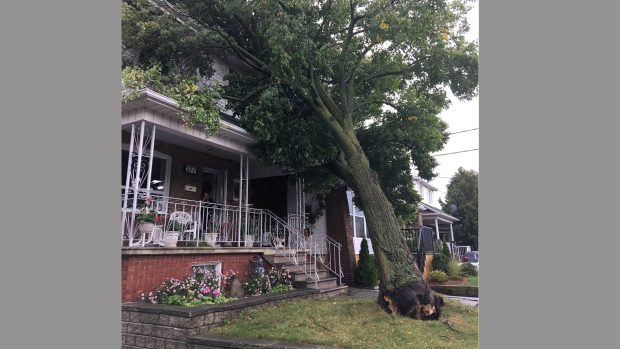 Thousands in GTA without power after winds knocked down trees, power lines